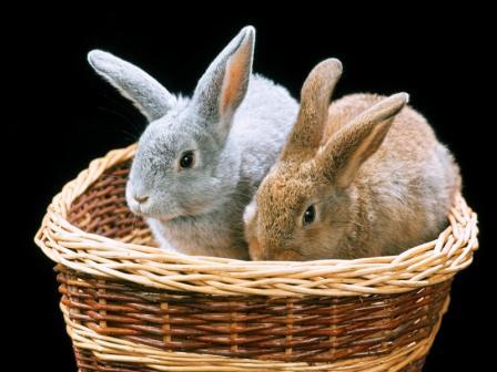 Новорічний кролик