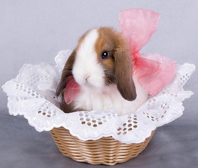 Що чекати нам в рік Кролика?