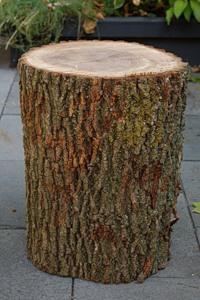 Журнальний столик з дерев'яного пня - 3