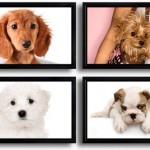 Собаки маленьких порід в картинках