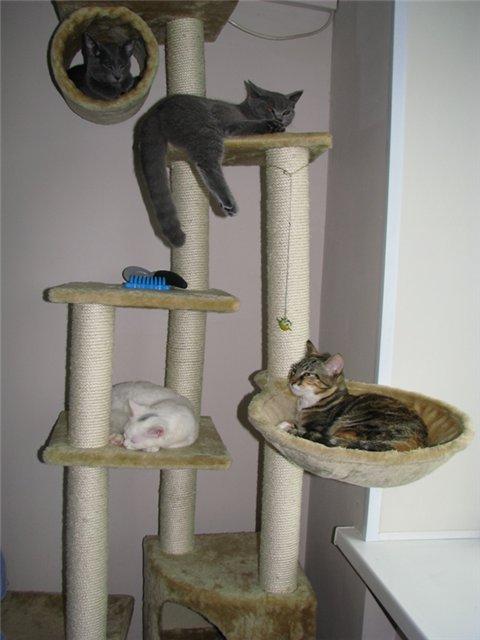 Будиночки для кішок - фото 14