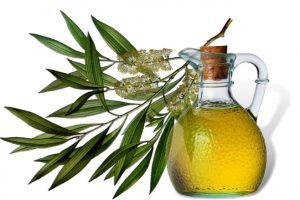 Масло чайного дерева: корисні властивості