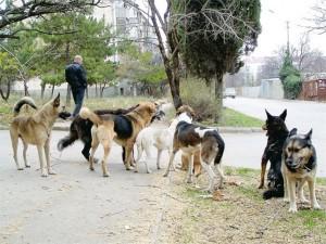 Як захиститися від нападу собак