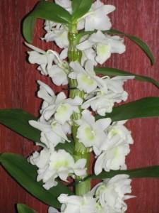 Догляд - орхідеї