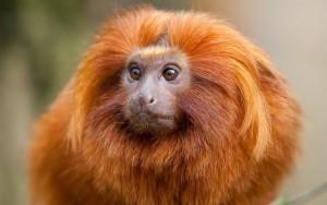 Що чекати від 2016 року Вогняної Мавпи